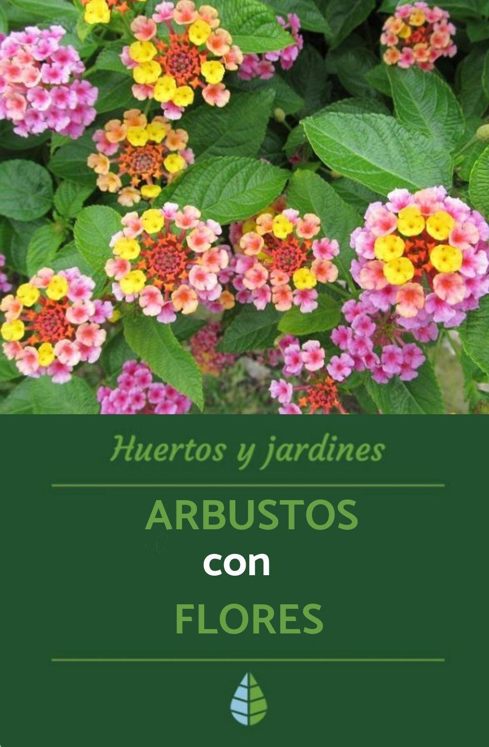 21 Arbustos Con Flores Nombres Y Fotos Arbustos Plantas Arbustos Arbustos De Hoja Perenne