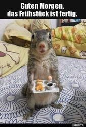 Guten Morgen, das Frühstück ist fertig … | Lustige Bilder, Sprüche, Witze, …  – Squirrel