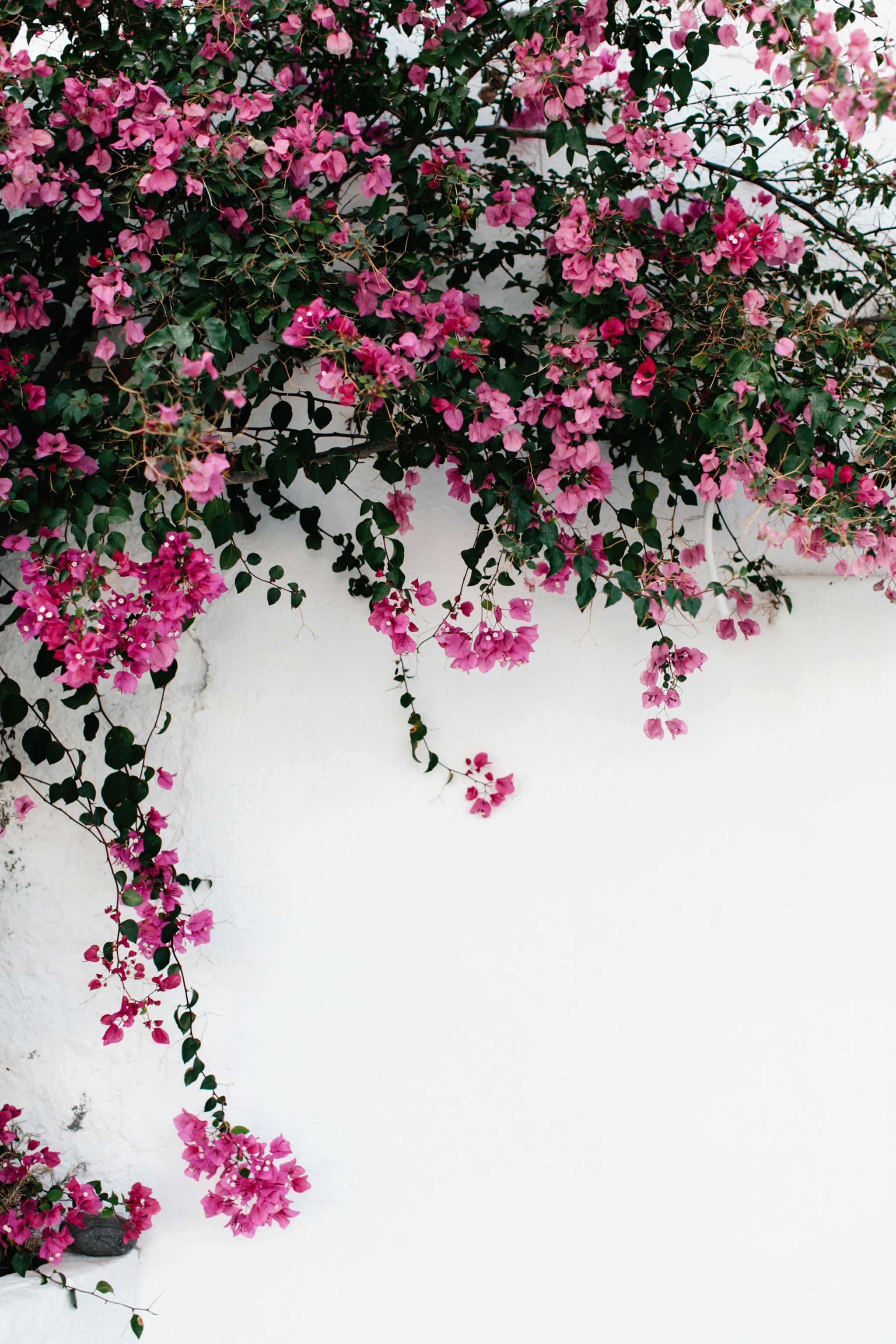 A R Y A Pinterest Riddhisinghal6 Flower Backgrounds