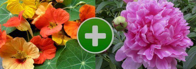 Цветы на клумбе — правильное соседство   Клумбы, Цветы и ...