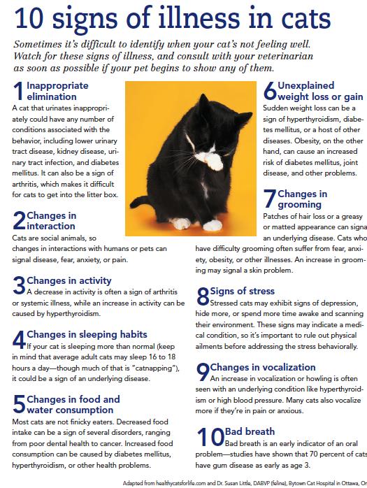 Http Crosskeysanimalhospital Com 10 Sign Of Illness In A Cat