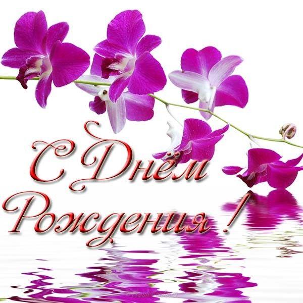 Открытки с днем рождения цветы орхидеи светлана, кошки гиф картинки