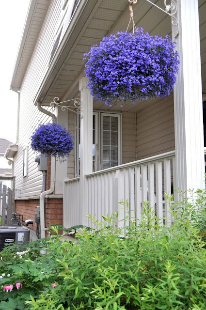 lobelia beautiful in the garden pinterest balkon blumenk sten und blumenk bel. Black Bedroom Furniture Sets. Home Design Ideas