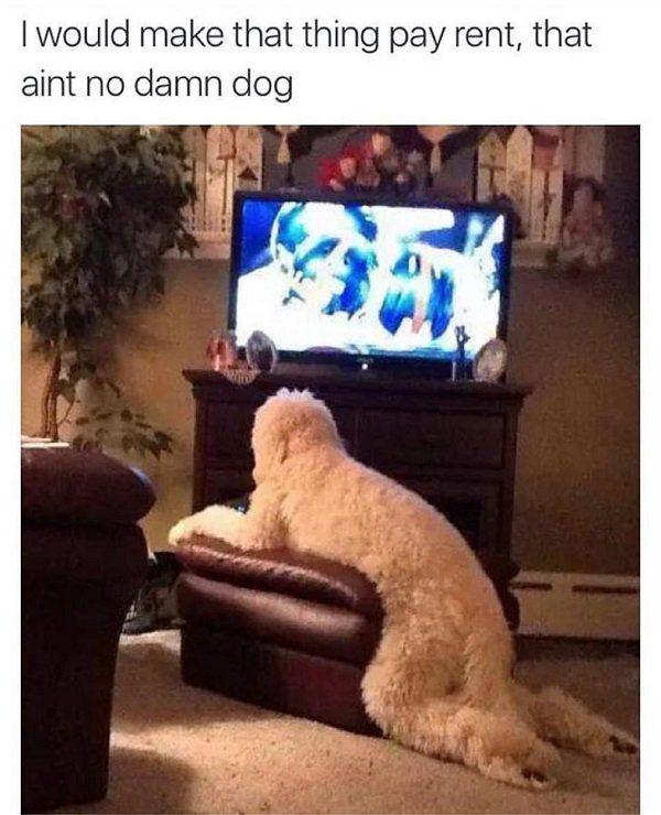 Dogs Are A Meme S Best Friend 30 Pics Hauskat
