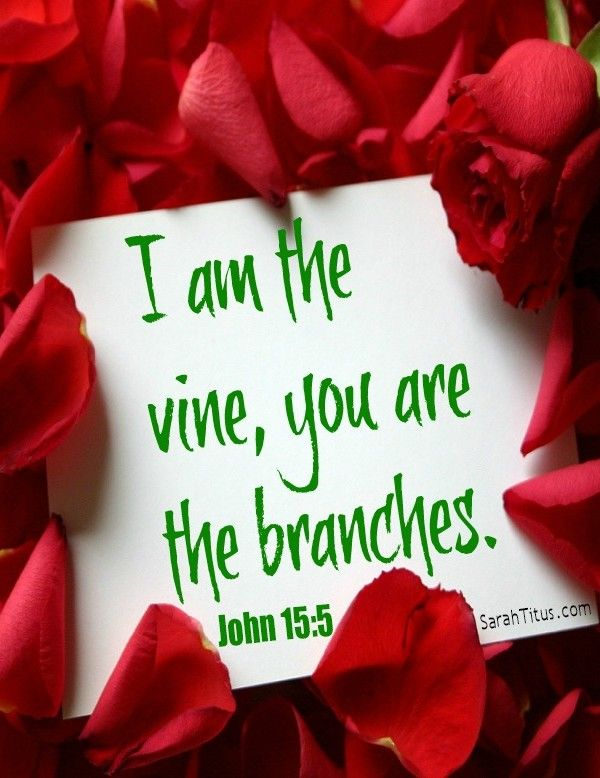 you may not want it, but you need it more than you know! an article about abiding. i am the vine, you are the branches. john 15:5