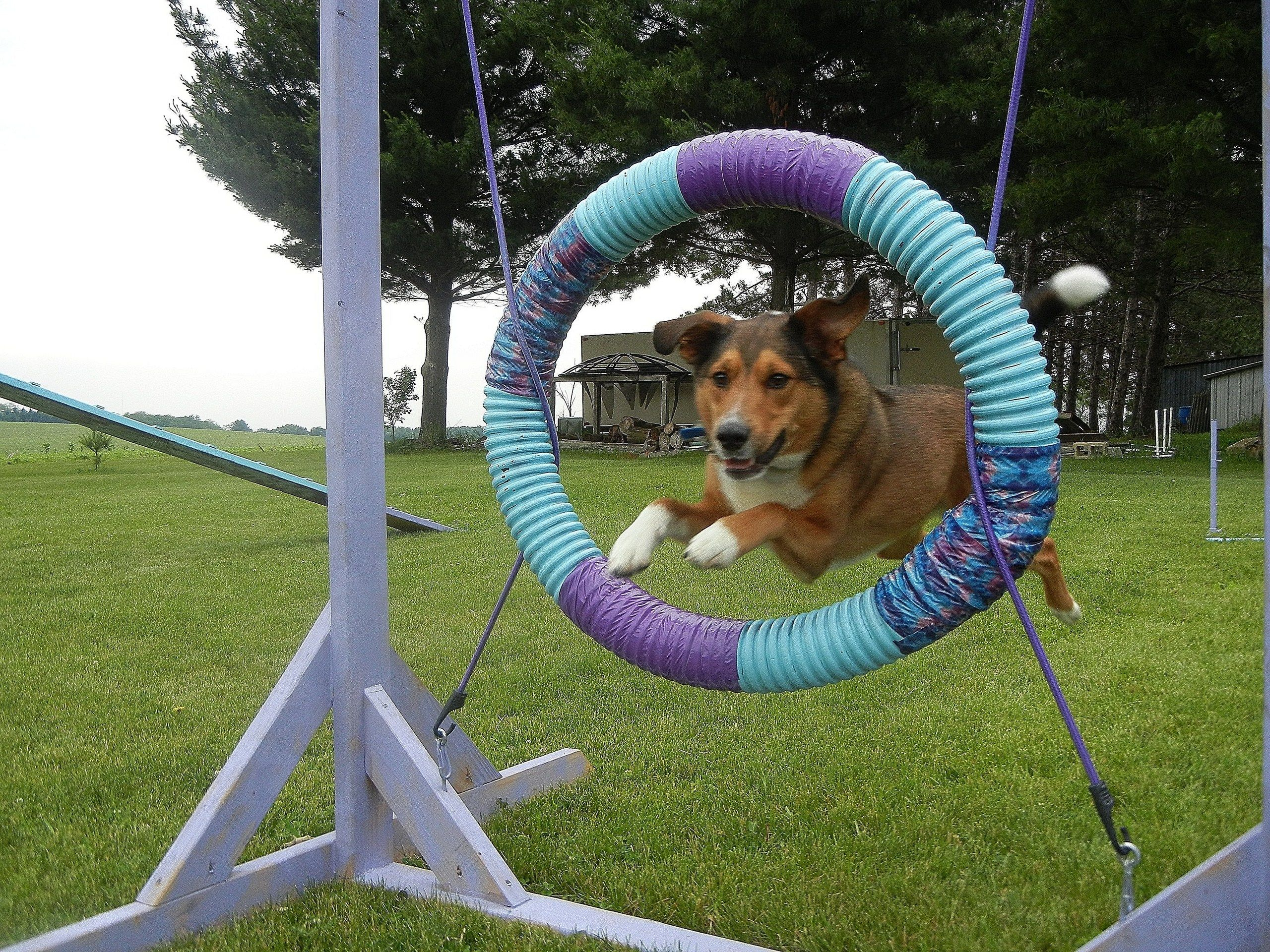 Mosesagility Dog Agility Dogs Agile
