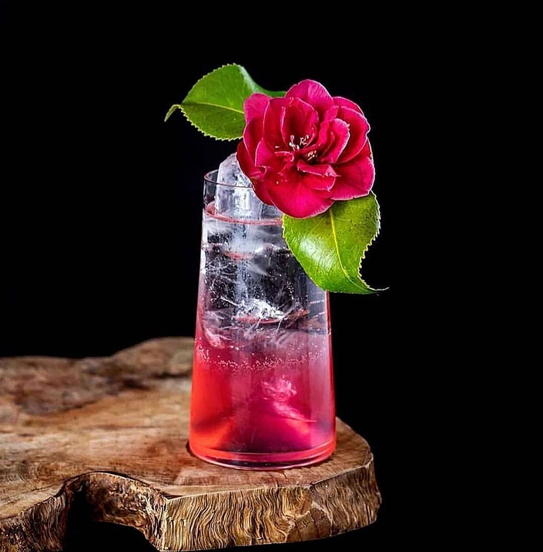 The Mulberry Punch By Westmountcocktail Made From Daffysgin Mulberry Gin Laniquedrinks Rose Petal Liqueur Shots Alcohol Vodka Wine Wine Recipes