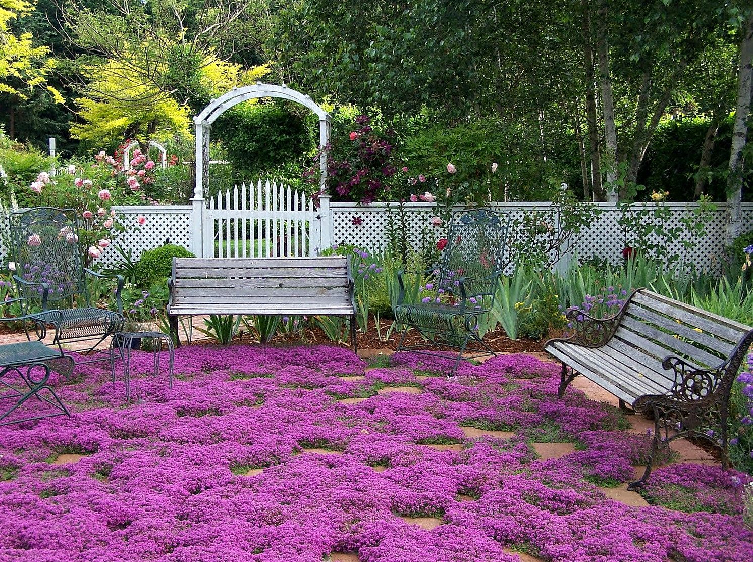 How to plant ground cover for shady areas - Creeping Thyme Ground Cover 1000 Seeds Fragrant Herb Pink Blooms Perennial Zones 4 To 9 Sun Or Light Shade Deerproof Thymus Serpyllum