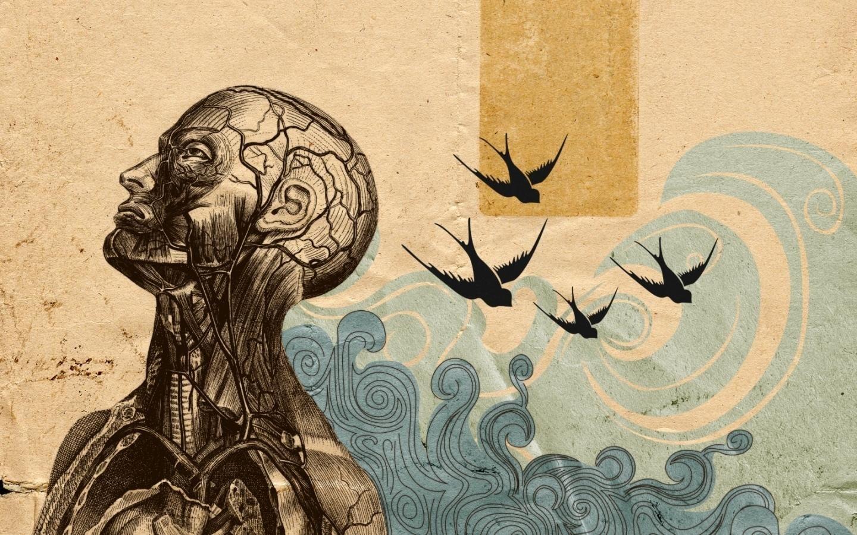 Anatomy Artistic Wallpapers Hd Desktop Wallpaper Art Art Wallpaper Iphone Artistic Wallpaper