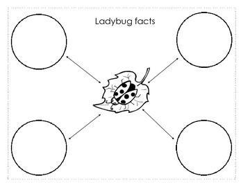 Ladybug UnitGraphic Organizer for informational