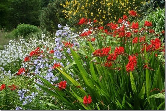 9 crocosmia lucifer 10 great perennials to grow for cutting 9 crocosmia lucifer 10 great perennials to grow for cutting best perennialsflower mightylinksfo