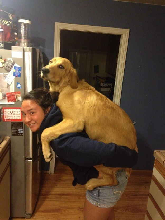 Golden Retrievers Who Just Want To Be Held  And a labradoodle too.    http://www.buzzfeed.com/ailbhemalone/golden-retrievers-who-just-want-to-be-held?utm_source=Triggermail_medium=email_term=Diy_campaign=DIY-responsive