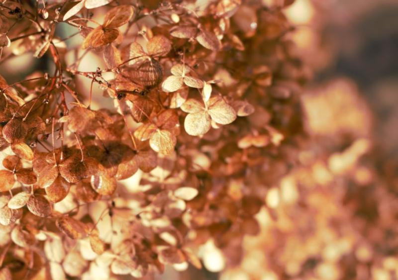 Herfst in de tuin by Mariska de Greef