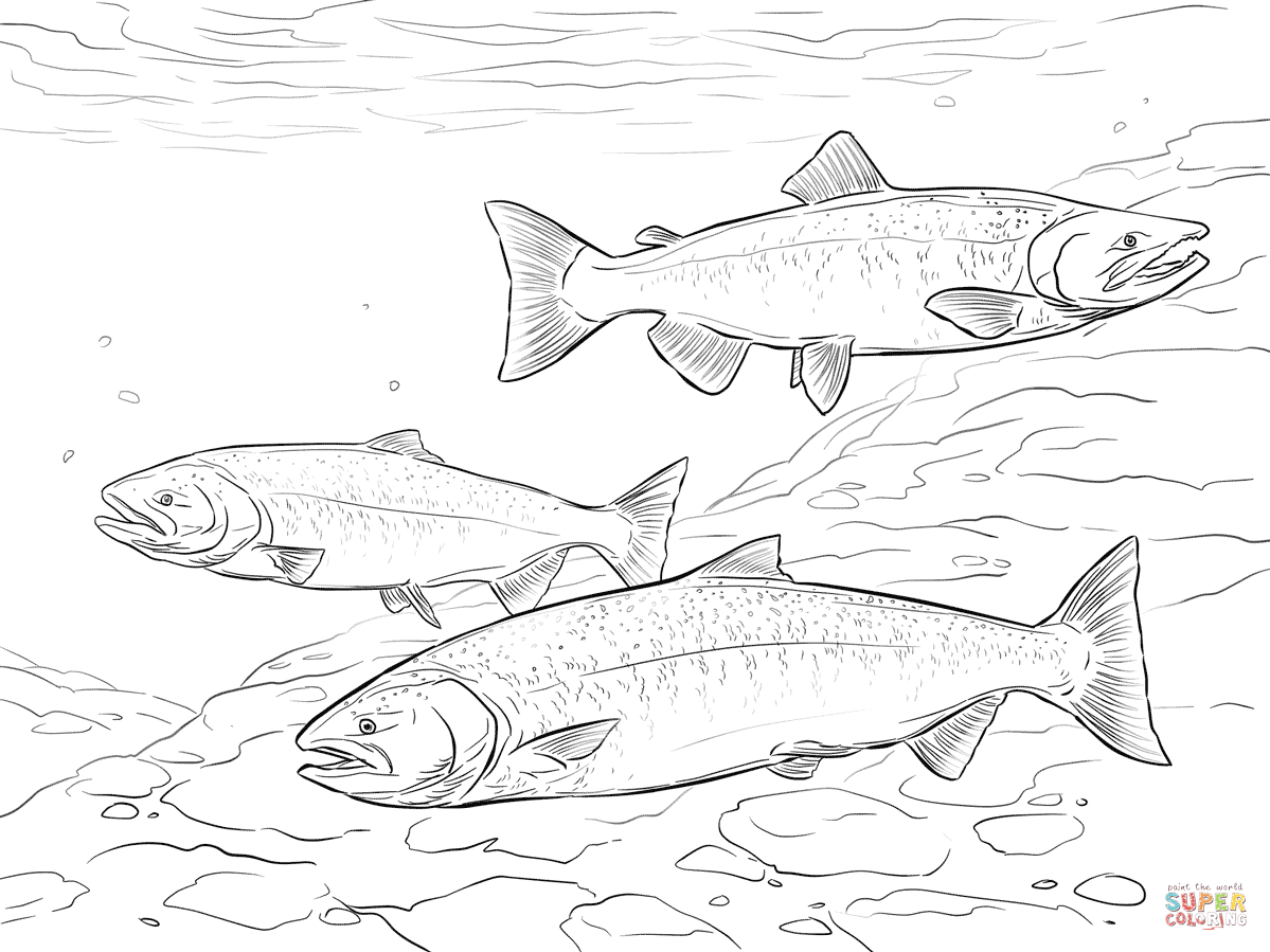 Chinook Salmon coloring page from Salmon category. Select