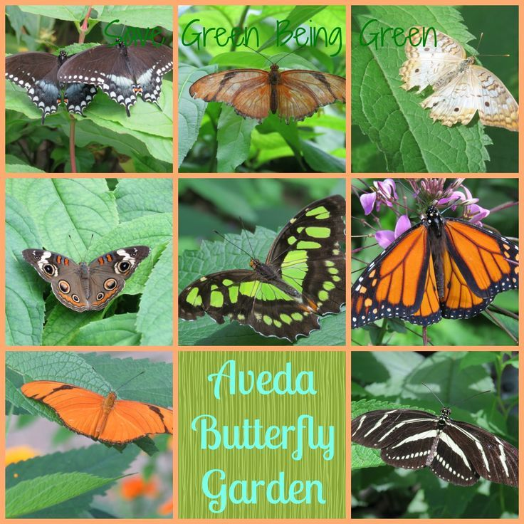 Aveda Butterfly Garden at the Minnesota Zoo in Apple