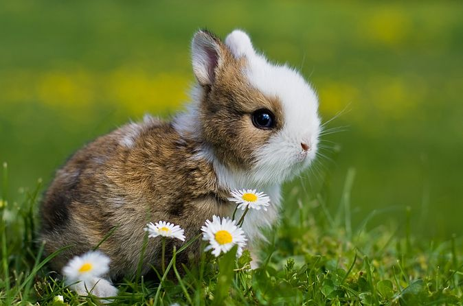 Cute! Nice pics on this site. #cutebabybunnies