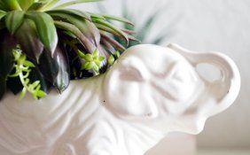 #succulents #cactus #decoration #diy SOUSOU DIYSIGN http://wp.me/p3hvgH-DW