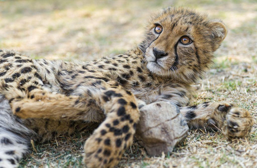 10 Legale Exotische Haustiere Die Die Offentliche Sicherheit Nicht Gefahrden In 2020 Exotische Haustiere Haustiere Susseste Haustiere