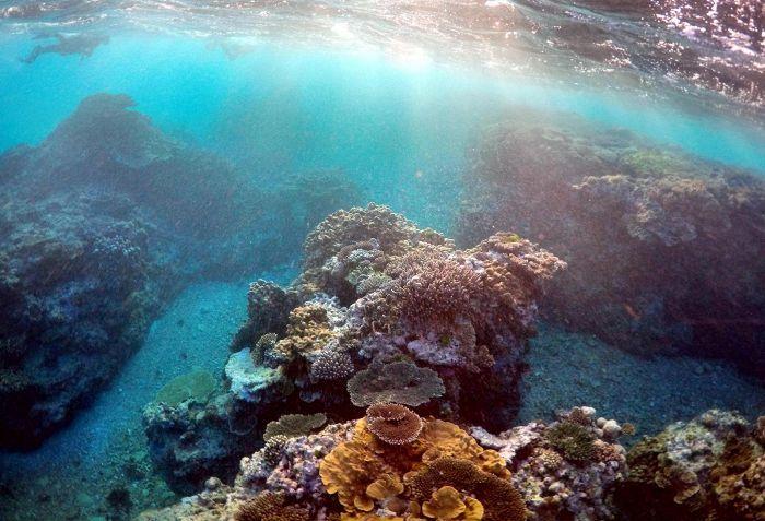 Australian Ison valliriutan kuntoa tutkittiin viime vuoden kesäkuussa. Nyt…
