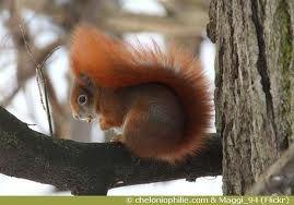 ecureuils photos - Recherche Google