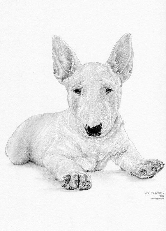 Bull Terrier Puppy 6 Dog Limited Edition Art Drawing Print Etsy Bull Terrier Art Bull Terrier Puppy Bull Terrier