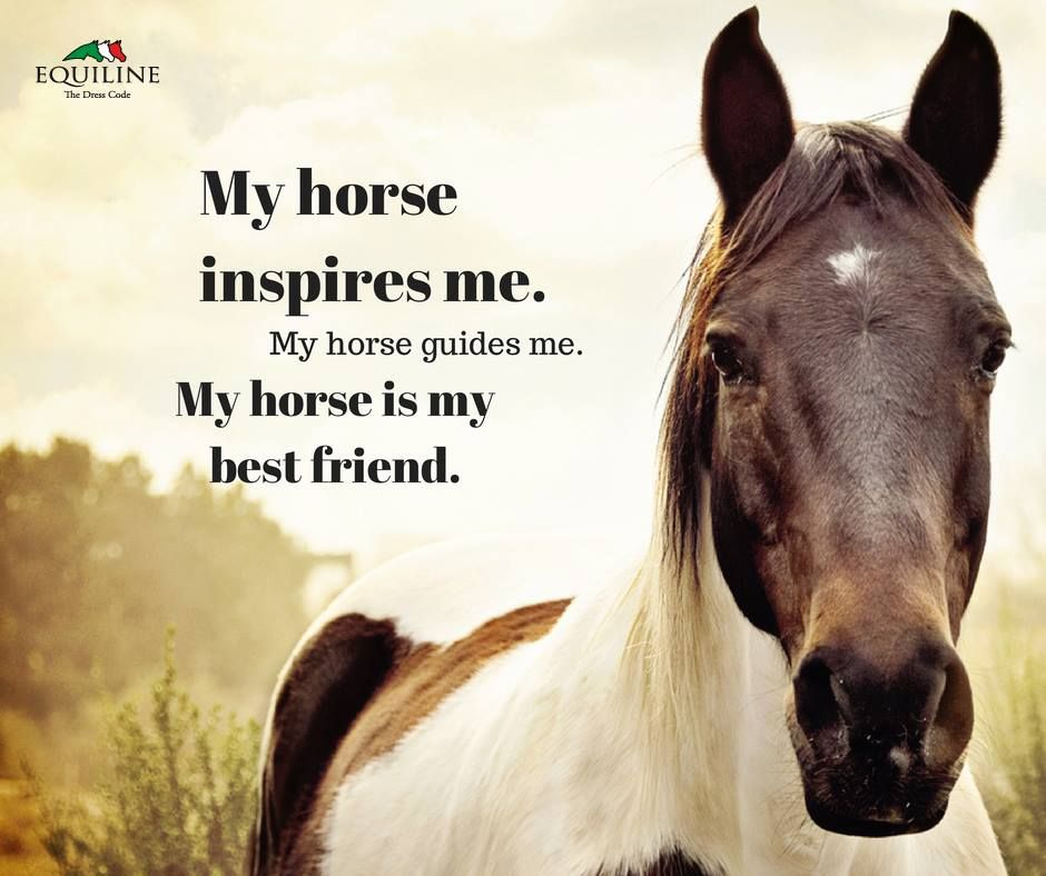 My horse inspires me my horse guides me my horse is my for Where to go horseback riding near me