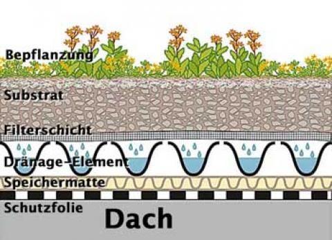 Für Ungeduldige Schnellwachsende Stauden Dachbegrünung