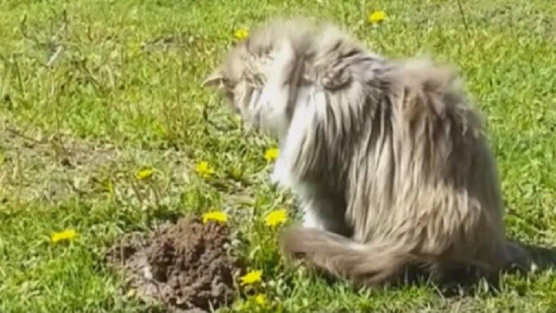 Curious Cat Sees A Mole Coming Out Of The Ground Then He Does The Most Hilarious Thing Ever Cats Pets Funny Curious Cat Cats Cat Meeting