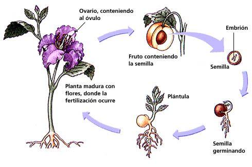 Tipos de reproduccion sexual de las plantas