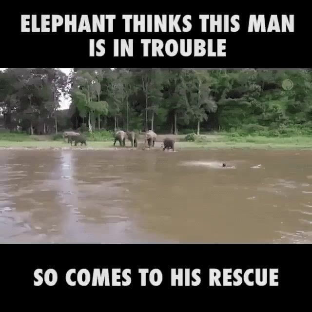 Elephant thinks man is drowning, so goes to rescue him #humorsgifs Elephant thinks man is drowning, so goes to rescue him - 9GAG #humorsgifs
