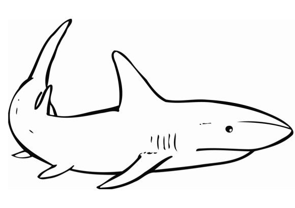 Printable Shark Coloring Pages