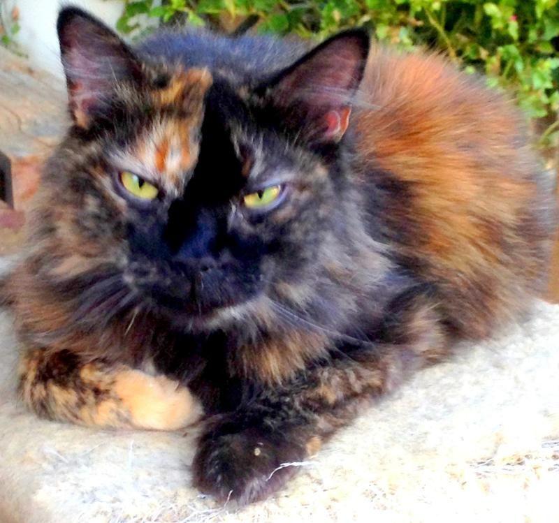 Adopt Mokie On Petfinder Kitten Adoption Animals Beautiful No Kill Animal Shelter