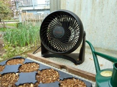 Is running a fan on your seedlings necessary? I sure think so now!