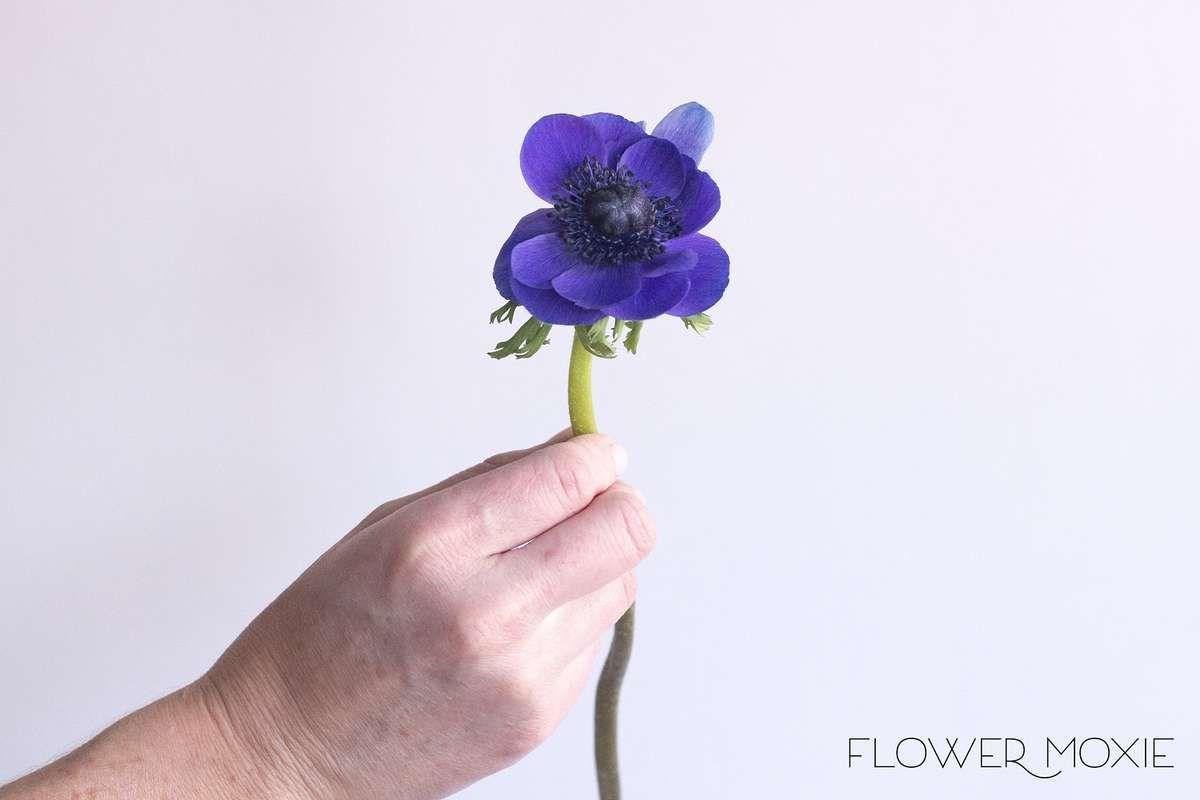 Anemone Blue Indigo Wedding Flower Guide Blue Wedding Flowers Wedding Flowers