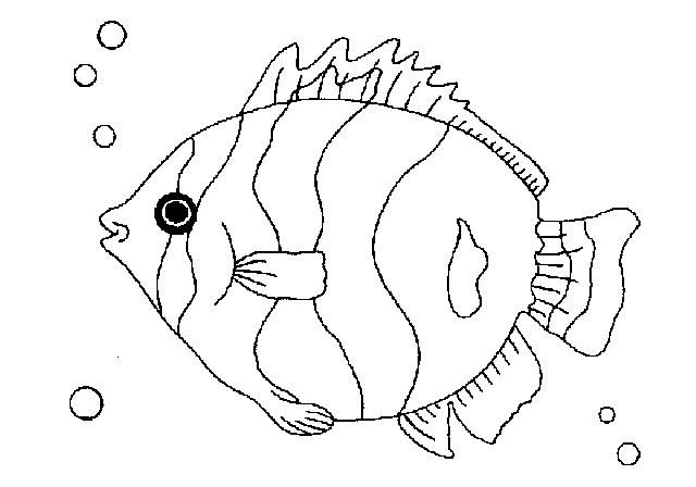 Coloring Book Pages Of Fish