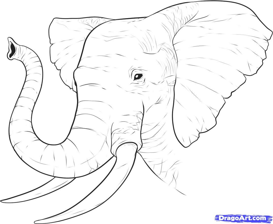 How To Draw A Realistic Elephant Draw Real Elephant By Dawn