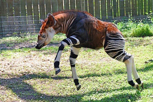 18 фантастических животных, которые живут рядом с нами, и которые могут исчезнуть навсегда