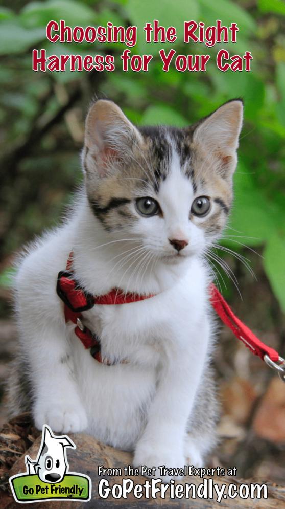 Craigslist Chicago Kittens For Sale