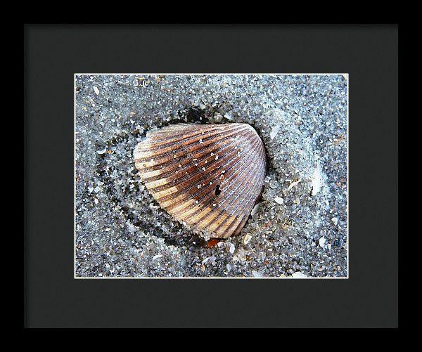 Framed Print - Sandy Shell