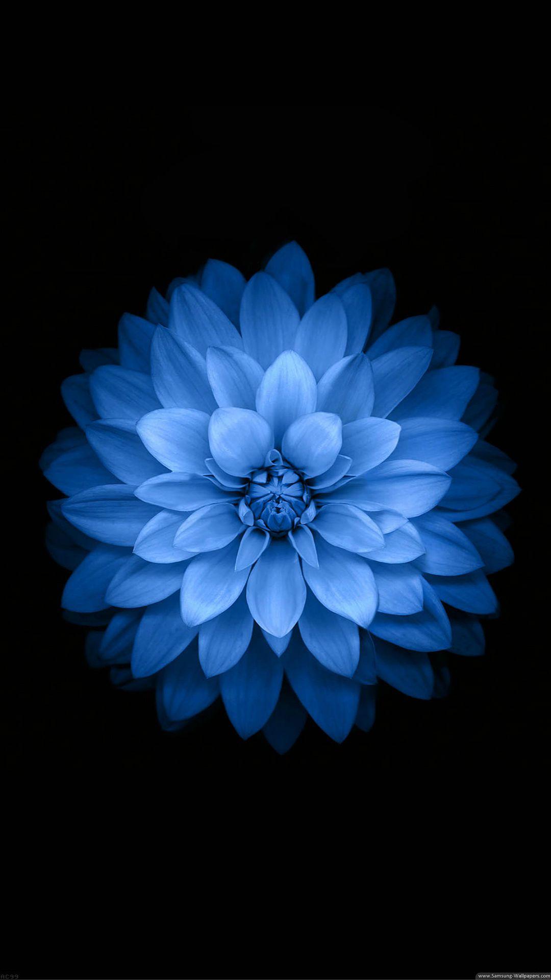 6 Flower Iphone Wallpaper Blue Flower Wallpaper Blue Wallpaper Iphone