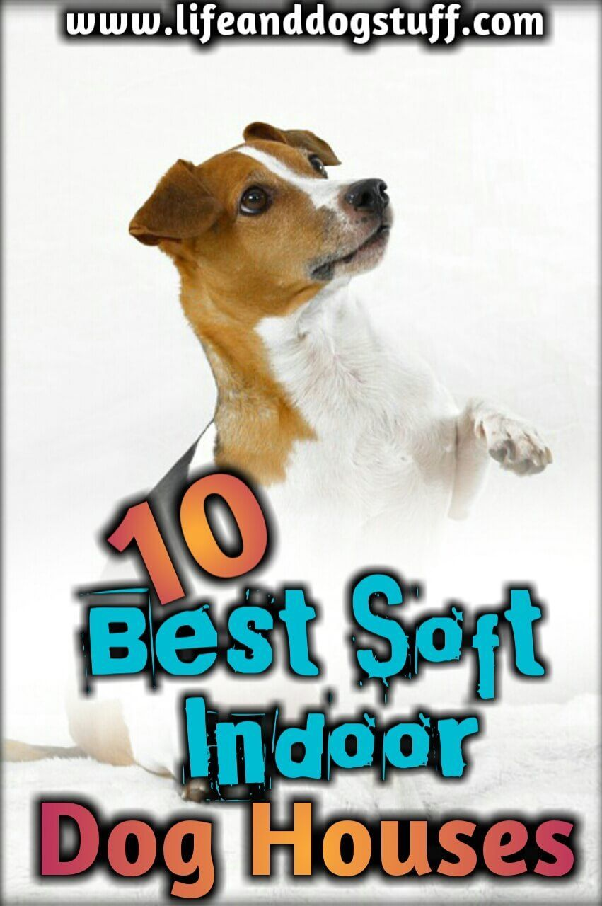 10 Best Soft Indoor Dog Houses For Small Dogs (With images
