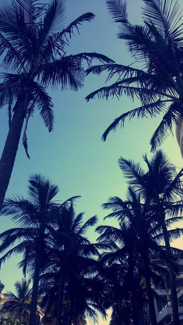 Palm Trees In Umhlanga Durban Summer Pinterest Palm Trees