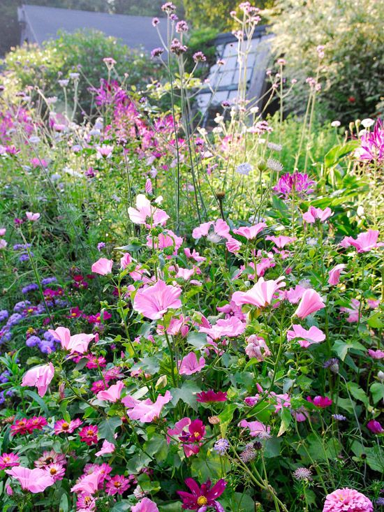 Perfect Pink And Purple Plant Combinations Purple Plants Pink