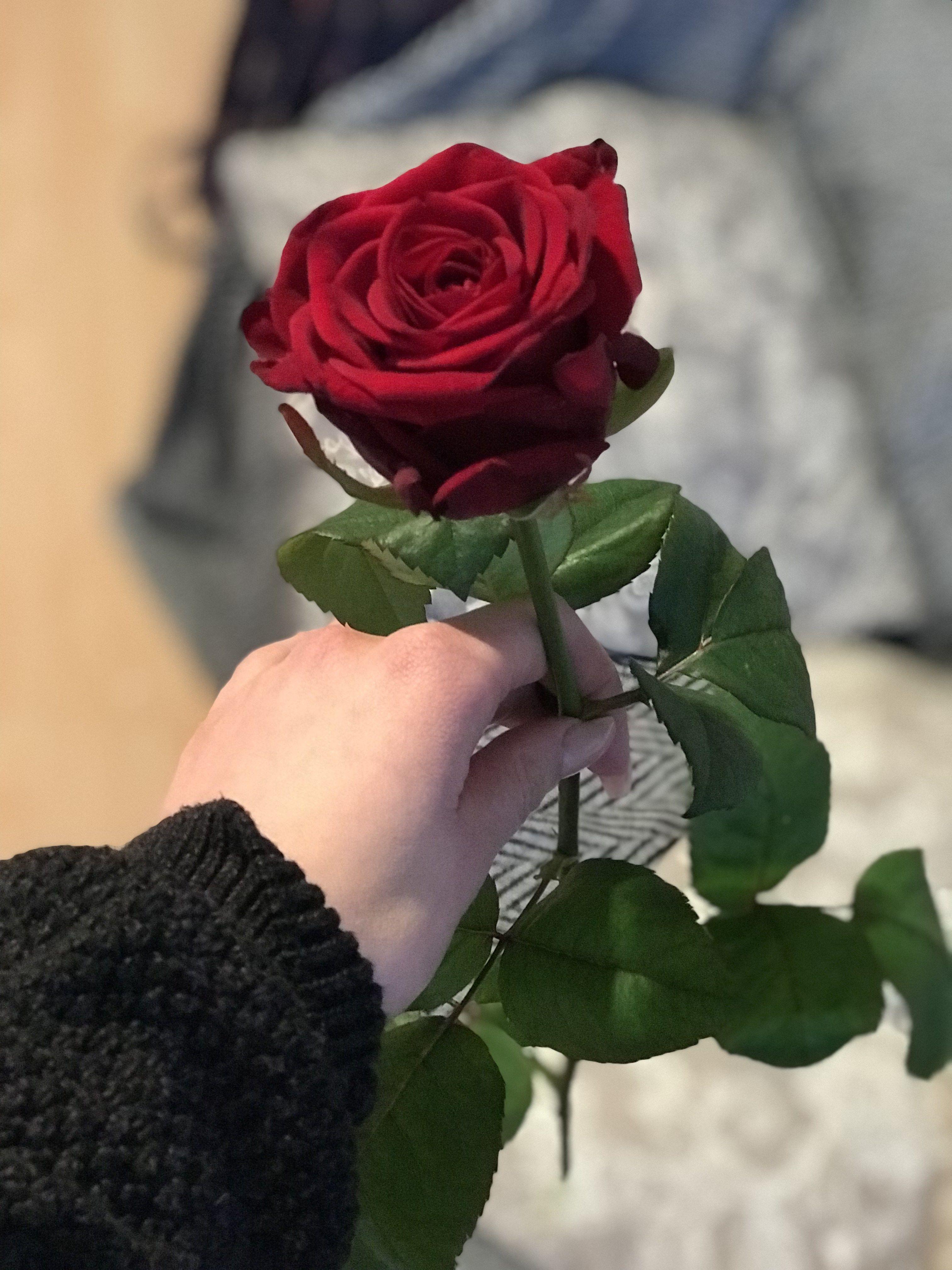 One Billion Rising Break The Chain Mein Valentinstag Beautiful Rose Flowers Beautiful Flowers Wallpapers Love Rose Flower