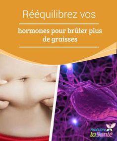 graisse brûlant des hormones alimentaires