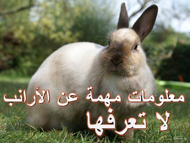 معلومات مهمة عن الأرانب Animals Blog Posts Blog