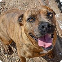 Pin On Adopt Foster Rescue Share