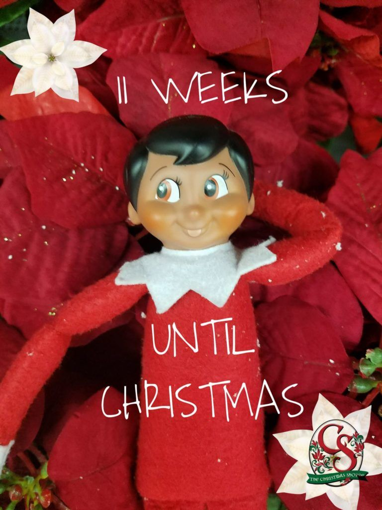 11 Weeks Until Christmas Meaning Behind Poinsettia