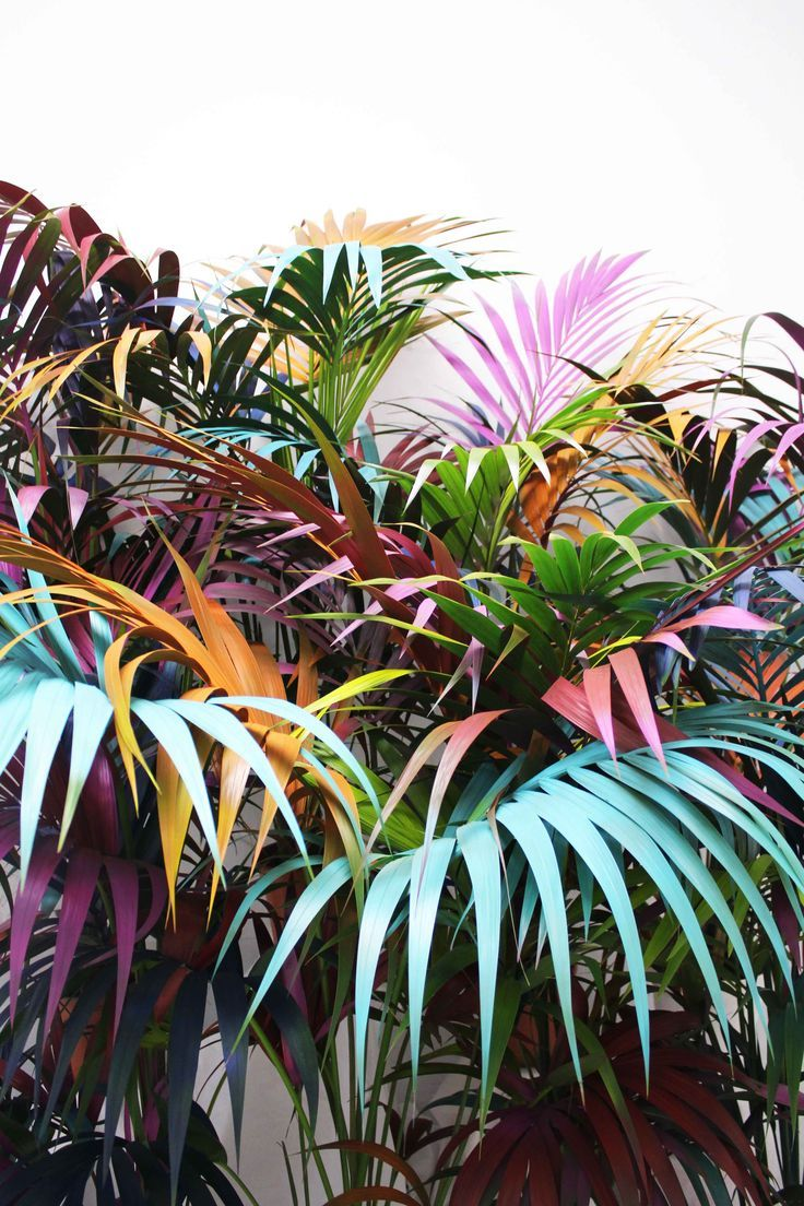 Ana Beltra, Colored jungle •