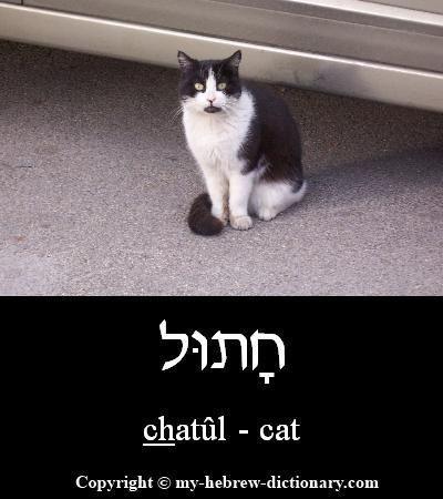 Cat In Hebrew Alfabet Jodendom Kattenschilderijen